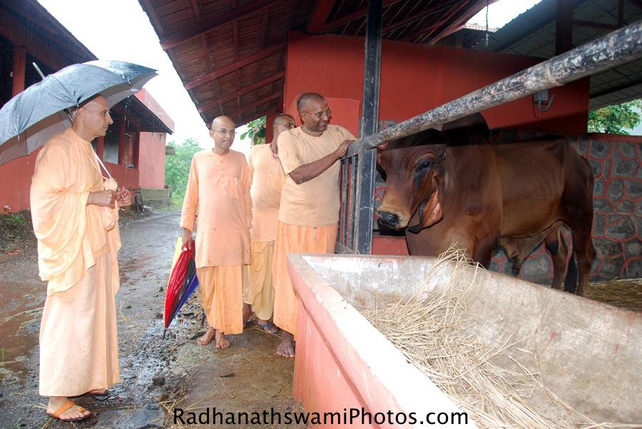Radhanath Swami at GEV Goshala