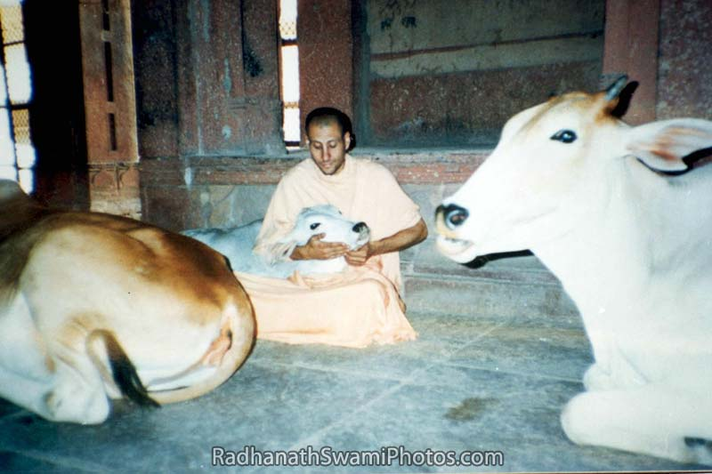 Radhanath Swami Embrassing Cow
