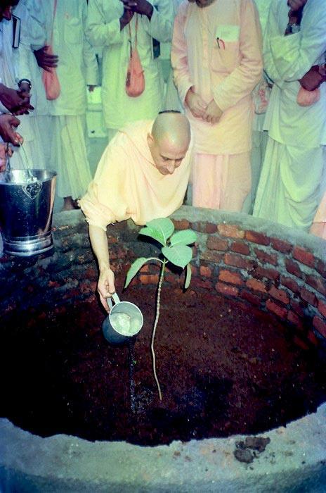 Radhanath-Swami planting Tamal