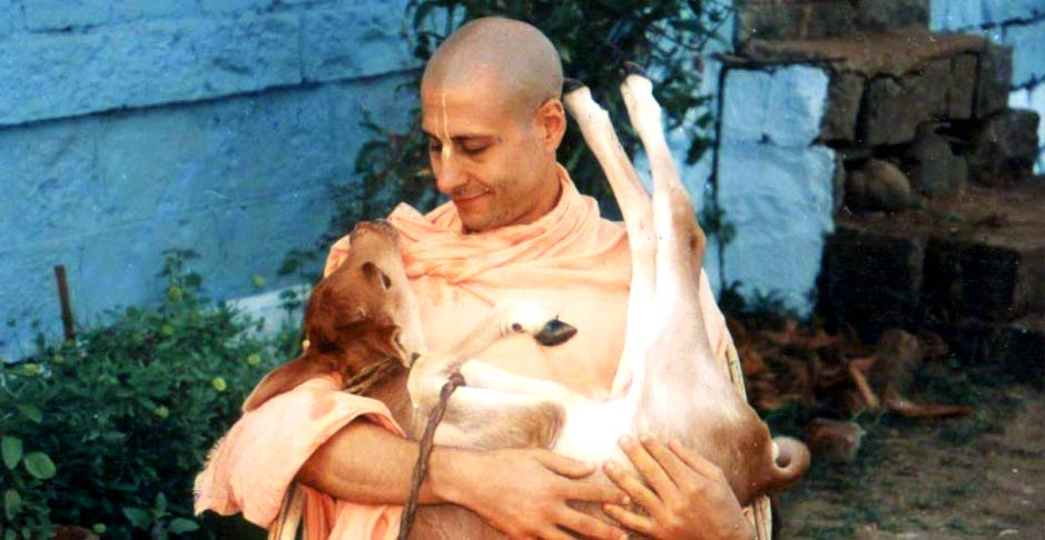 Radhanath Swami with a Calf