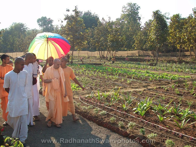 Radhanath Swami observing the Field at Govardhan Ashram