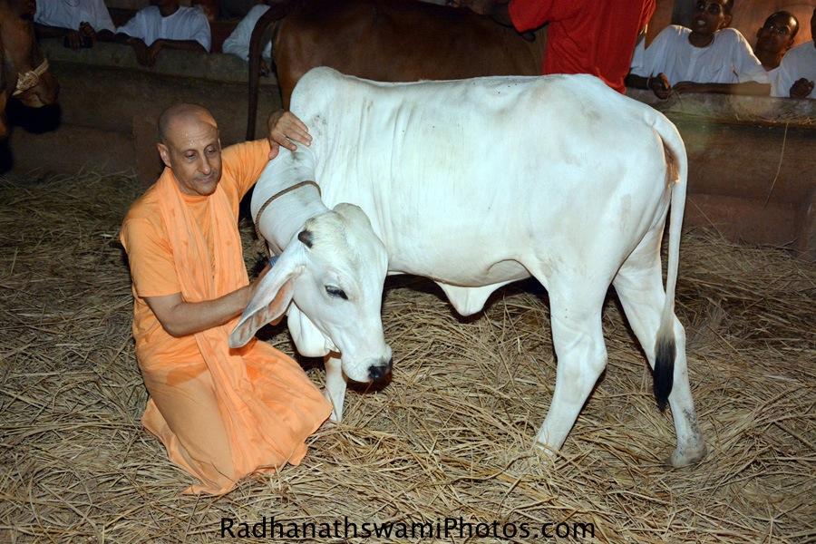 Radhanath at GEV Goshala