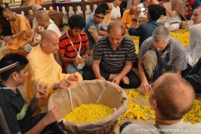 Radhanath Swami plucking flower petals for the festival